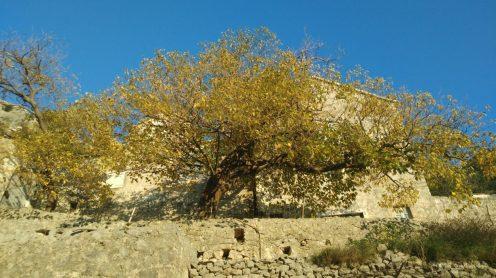Pustinja Blaca, jesen, stablo, pročelje