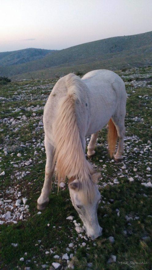 Pustinja Blaca, konj