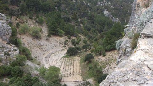 Pustinja Blaca, wineyard, vinograd