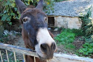 Dol - Donkey / Magarac