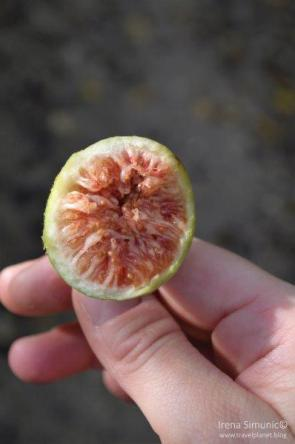 Fig on the Camino